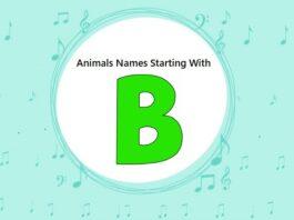 Animal Names That Start with B