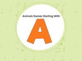Animals Names That Start with A