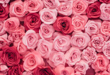 Baby Girl Names That Start with Rose
