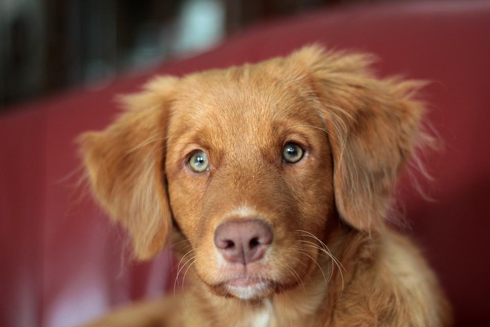 Girl-Female Dog Names