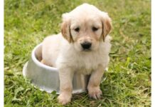 Top Dog Names Starting with L