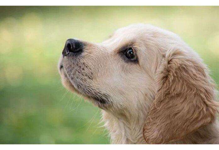 Top Girl Dog Names Starting with V