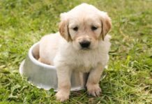 Top Male Dog Names Starting with B