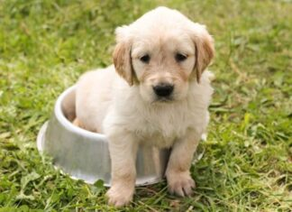 Top Male Dog Names Starting with L