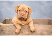 Top Male Dog Names Starting with O