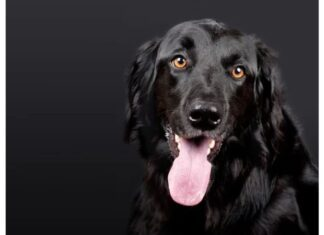 Top Male Dog Names Starting with P