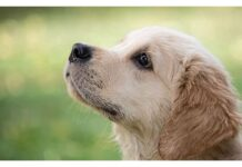 Top Male Dog Names Starting with V